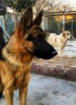 حیوانات خانگی و اهلی