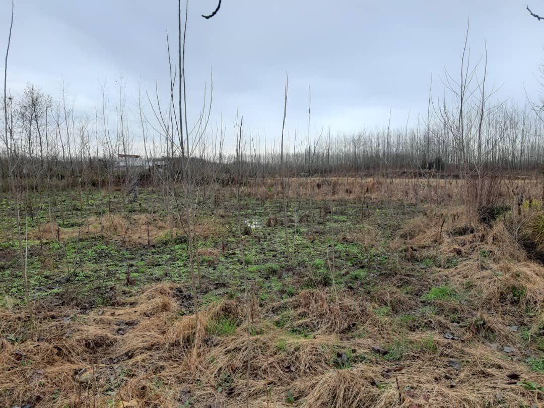 فروش ۲۰۰۰ متر مربع زمین با ویوی دو طرف جنگل در ماسال + فیلم