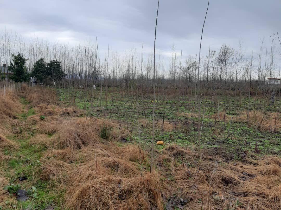 فروش 2000 متر مربع زمین با ویوی دو طرف جنگل در ماسال + فیلم (4)