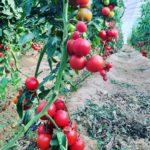 آشنایی با کسب و کارهای کشاورزی و دامپروری در بزرگترین کانال کشاورزی در تلگرام @canalkeshavarzi