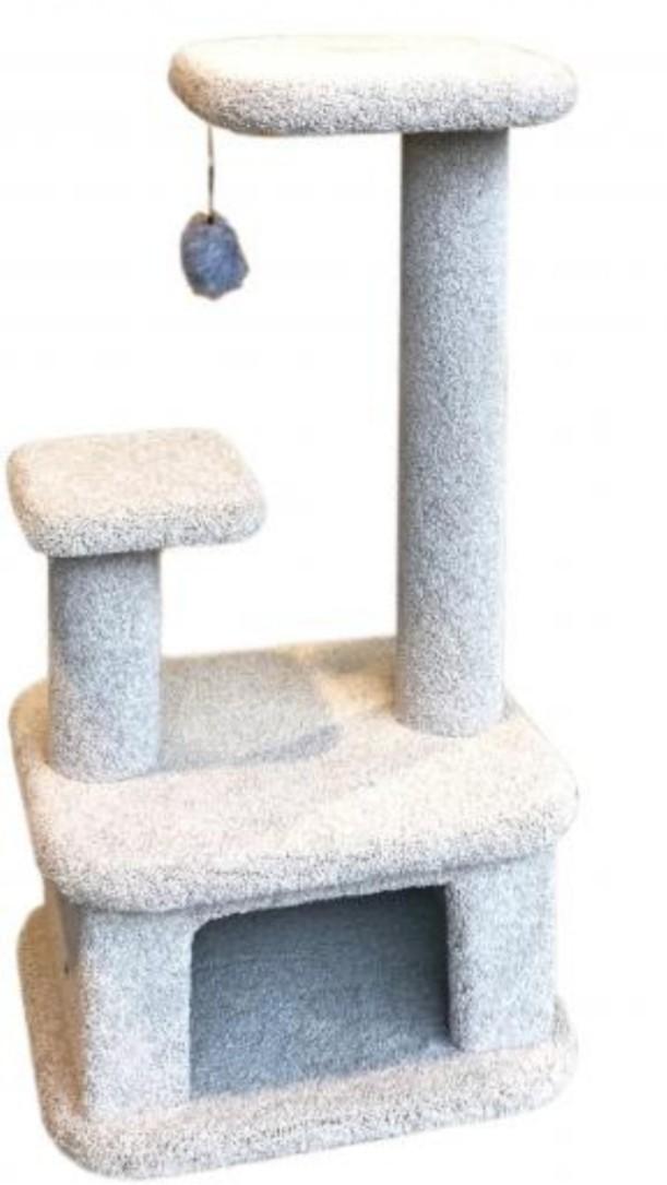 اسکرچر گربه (AST)