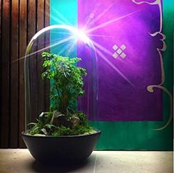 فروش تراریوم و آموزش ساخت باغ های شیشه ایی