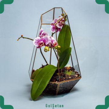 فروشگاه آنلاین گل وگیاه گُل سِتان