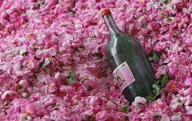 گلاب و عرقیجات گیاهی و شربتهای گیاهی برند نوش آفرین